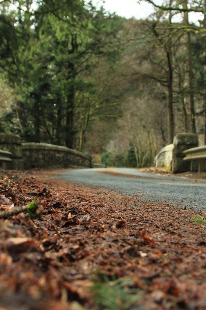 folhas secas de outono na beira da estrada prozimo a um lago e uma ponte no interior do pais de gales.