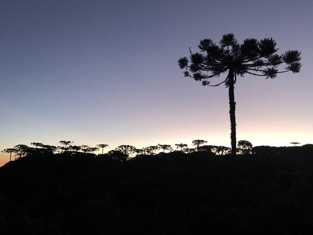 pôr do sol com araucária no cânion Itaimbezinho, rio grande do sul