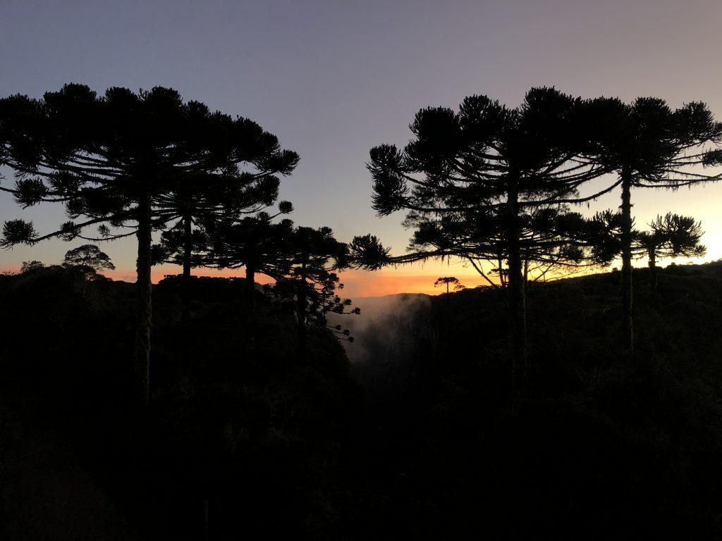 por do sol com pinheiros de araucaria na trilha do vertice, no itaimbezinho, rio grande do sul