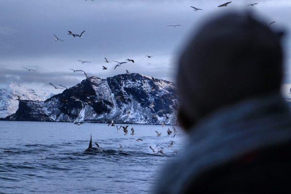 mulher de touca olhando baleias no norte da noruega